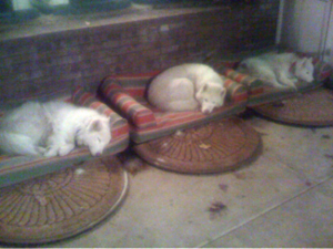 sleeping woofpack